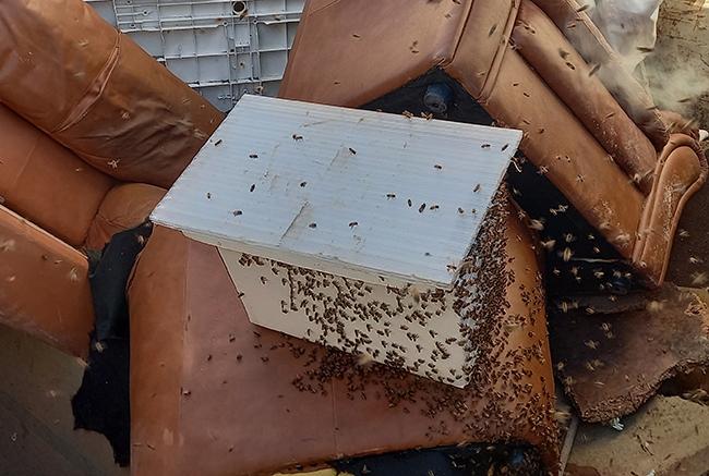 decheterie jau abeille 2 Les abeilles colonisent la benne mobilier SMICOTOM 33