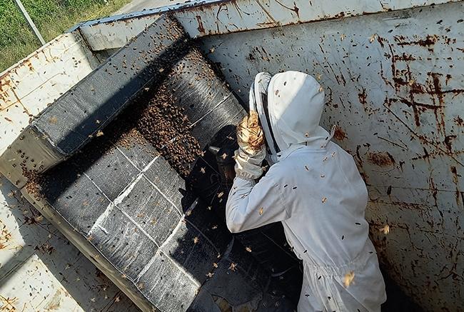 decheterie jau abeille 4 Les abeilles colonisent la benne mobilier SMICOTOM 33
