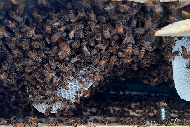 decheterie jau abeille 5 Les abeilles colonisent la benne mobilier SMICOTOM 33