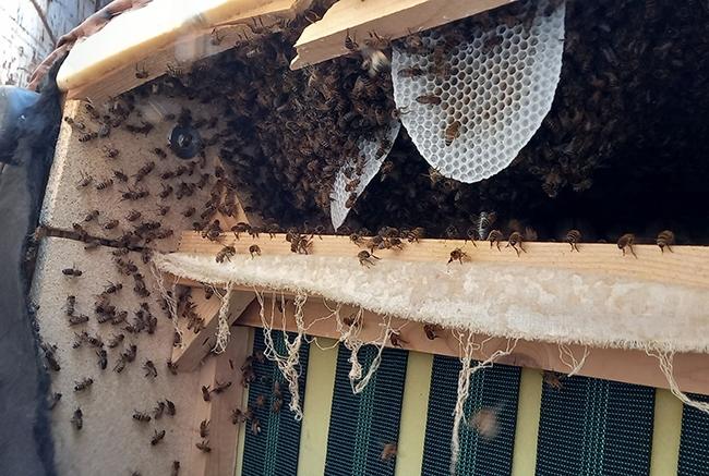 decheterie jau abeille 6 Les abeilles colonisent la benne mobilier SMICOTOM 33